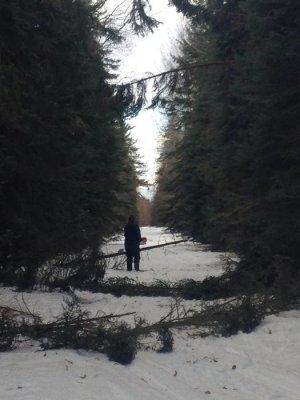 Clearing Trail.jpg